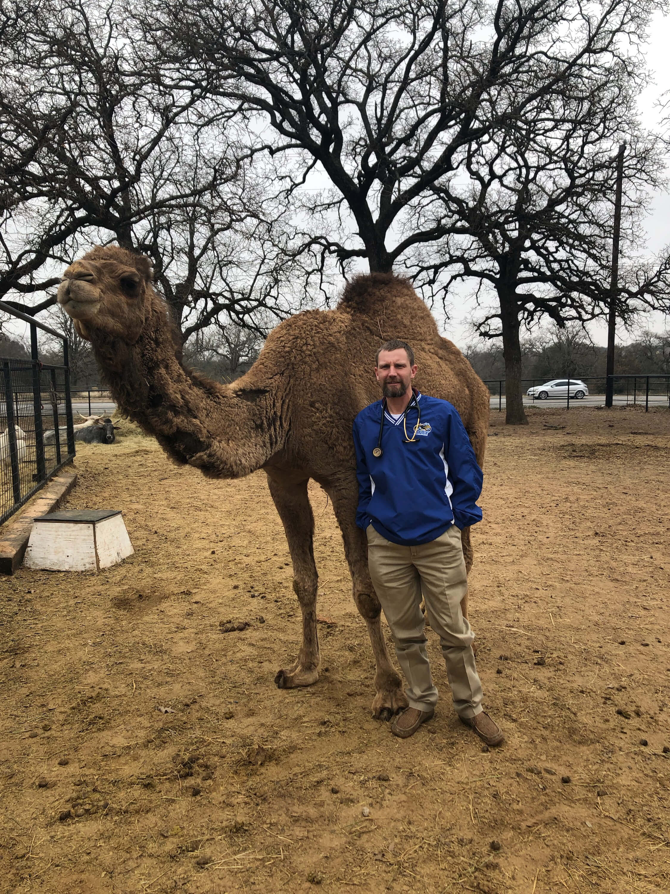 camel-receives-veterinary-care