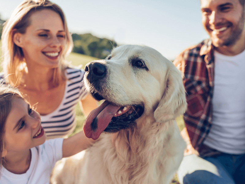 Top Rated Local Veterinarians – Riverstone Veterinary Group