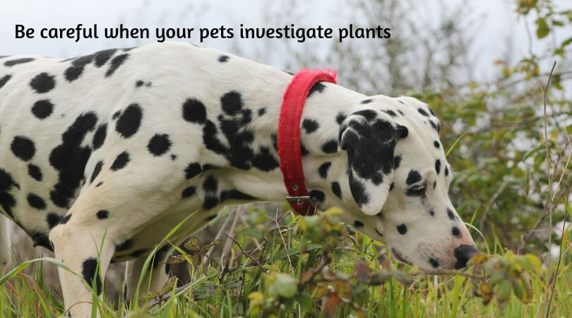 protecting-pets-from-poisons